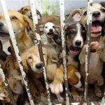 Três milhões de euros para Centros de Recolha de Animais