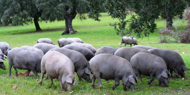 Ministros  da agricultura de Portugal e Espanha juntos em webinar